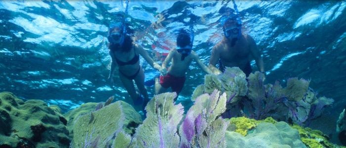 Snorkelers Underwater